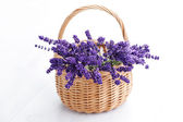 Basket of lavender — Stock Photo