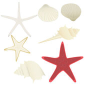 Collection of vector starfishes and shells — Stock Vector