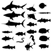 Silhouettes of european fishes — Stock Vector