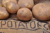 Aardappelen — Stockfoto