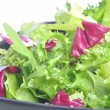 Mixed salad leaves - Foto de Stock