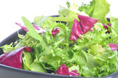 Mixed salad leaves — Stock Photo