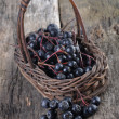 aronia berries — Stock Photo
