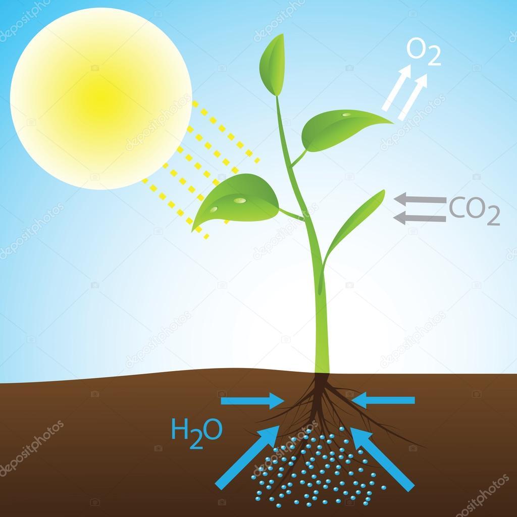 Factores externos que influyen en el proceso de la fotosintesis 26