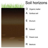 Vector illustration of soil horizons (layers) — Stock Vector
