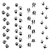 Trails of animals steps isolated on white background (vector) — Stock Vector
