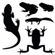 Stock Vector: Silhouettes of amphibians, vector