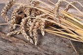 Wheat on the wooden table — Stock Photo