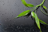 Wet bamboo leaves on black glass. Spa background — Stock Photo