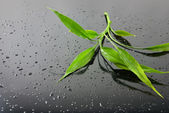 Water drops and green bamboo leaves on black glass — Stock Photo