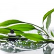 Asian eco backgrounds with bamboo and water drops — Stockfoto