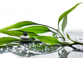 Asian eco backgrounds with bamboo and water drops — Stock Photo