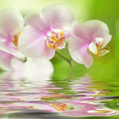 Beautiful pink orchid flower background reflected in water — Stock Photo