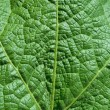 Royalty-Free Stock Photo: Close up green leaf texture