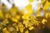 秋の黄色の葉の背景 — ストック写真