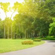 Path through landscaped park — Stock Photo #29847697