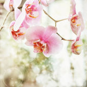 Beautiful pink orchid flowers background — Stock Photo