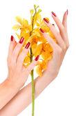 Hand met gele orchidee — Stockfoto