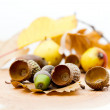 Autumn fruits — Foto Stock