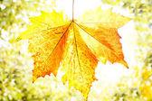 Autumn leaf — 图库照片