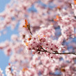 Spring blooming — Stock Photo #25942027