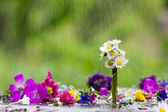 Colorful flower and drops of rain in background — Stock Photo
