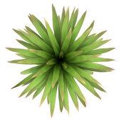 Beyaz arka plan üzerinde izole dağ lahana palmiye ağacının üstten görünüm — Stok fotoğraf