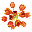 Top view bouquet of orange tulips in vase isolated on white background — Stock Photo
