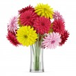 Bouquet of yellow red and pink flowers in vase isolated on white background — Stock Photo #18910417
