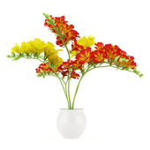 Red and yellow flower in pot isolated on white background — Stock Photo