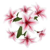 Top view of bouquet of pink lilies isolated on white background — Stock Photo
