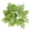 Top view of decorative tree in pot isolated on white background - Stock fotografie