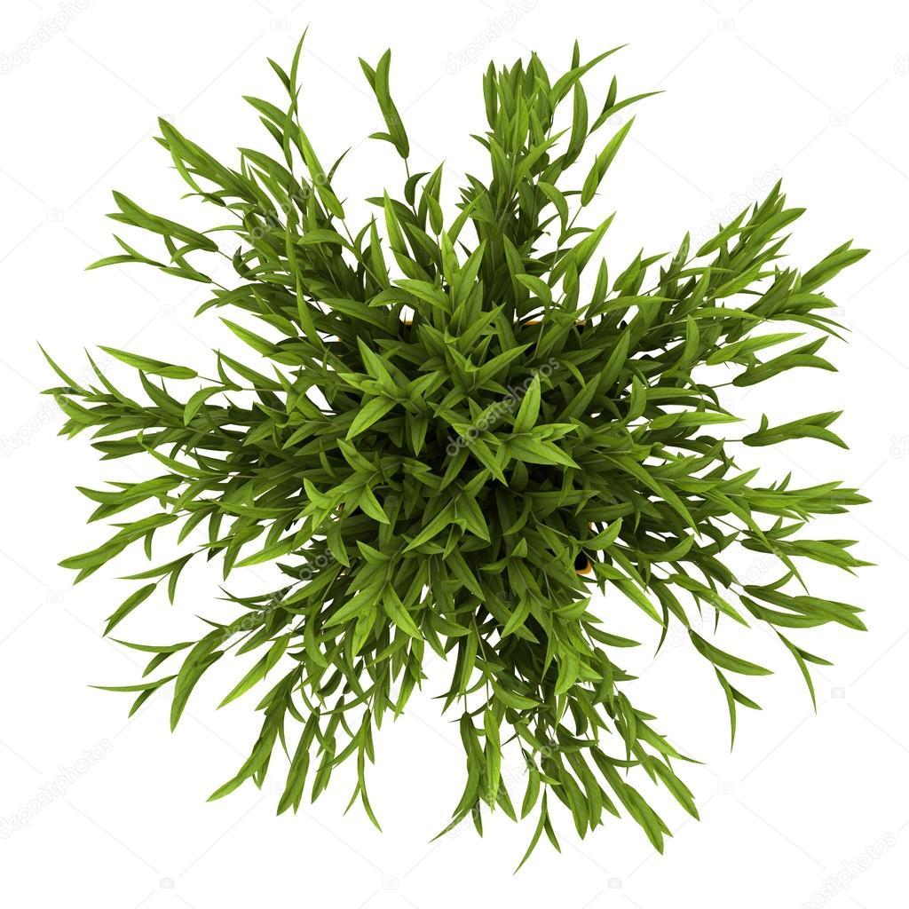 Vue de dessus de plante d 39 int rieur d coratif en pot jaune - Pot decoratif interieur ...