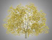 Amerykański buk drzewo na tle szarym tle jesień — Zdjęcie stockowe