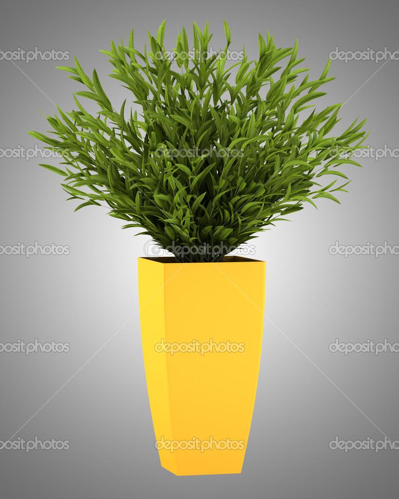 Plante d 39 int rieur d coratif en pot jaune isol sur fond - Pot decoratif interieur ...