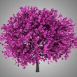 Judas tree isolated on gray background — Stock Photo
