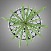 Pohled shora kaktus rostliny v hrnci izolovaných na šedém pozadí — Stock fotografie