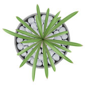 Top view of cactus plant in pot isolated on white background — Stock Photo
