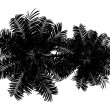 Top view silhouette of two Areca palm trees isolated on white ba — 图库照片