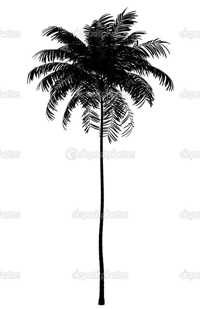 Palm Trees Silhouette Silhouette of Areca Palm Tree