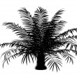 Silhouette of sugar palm tree isolated on white background — Stock Photo