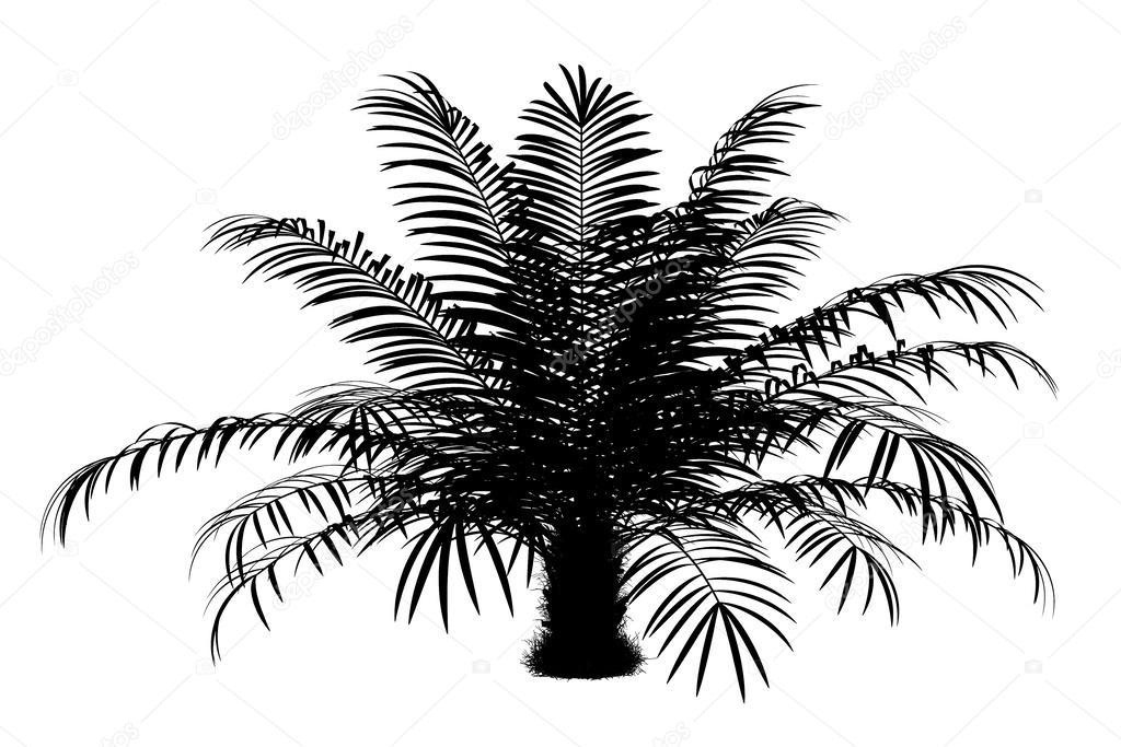 Palm Trees Silhouette Silhouette of Sugar Palm Tree