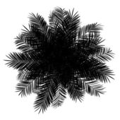 Top view silhouette of date palm tree isolated on white backgrou — Stock Photo
