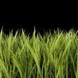 Green grass isolated on black background — Stock Photo #42339239