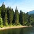 Stock Photo: Mysterious Sinevir lake among fir trees. Carpathians. Ukraine