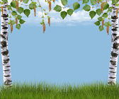 Background with birch and grass — Stock Photo