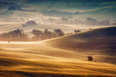 Tuscany - Italy — Stock Photo