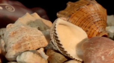Antique vessels and sea shells — Stock Video