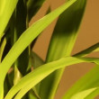 Rotate yucca loopable background - Foto Stock