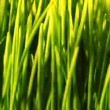 Green grass loopable background — Stock Video